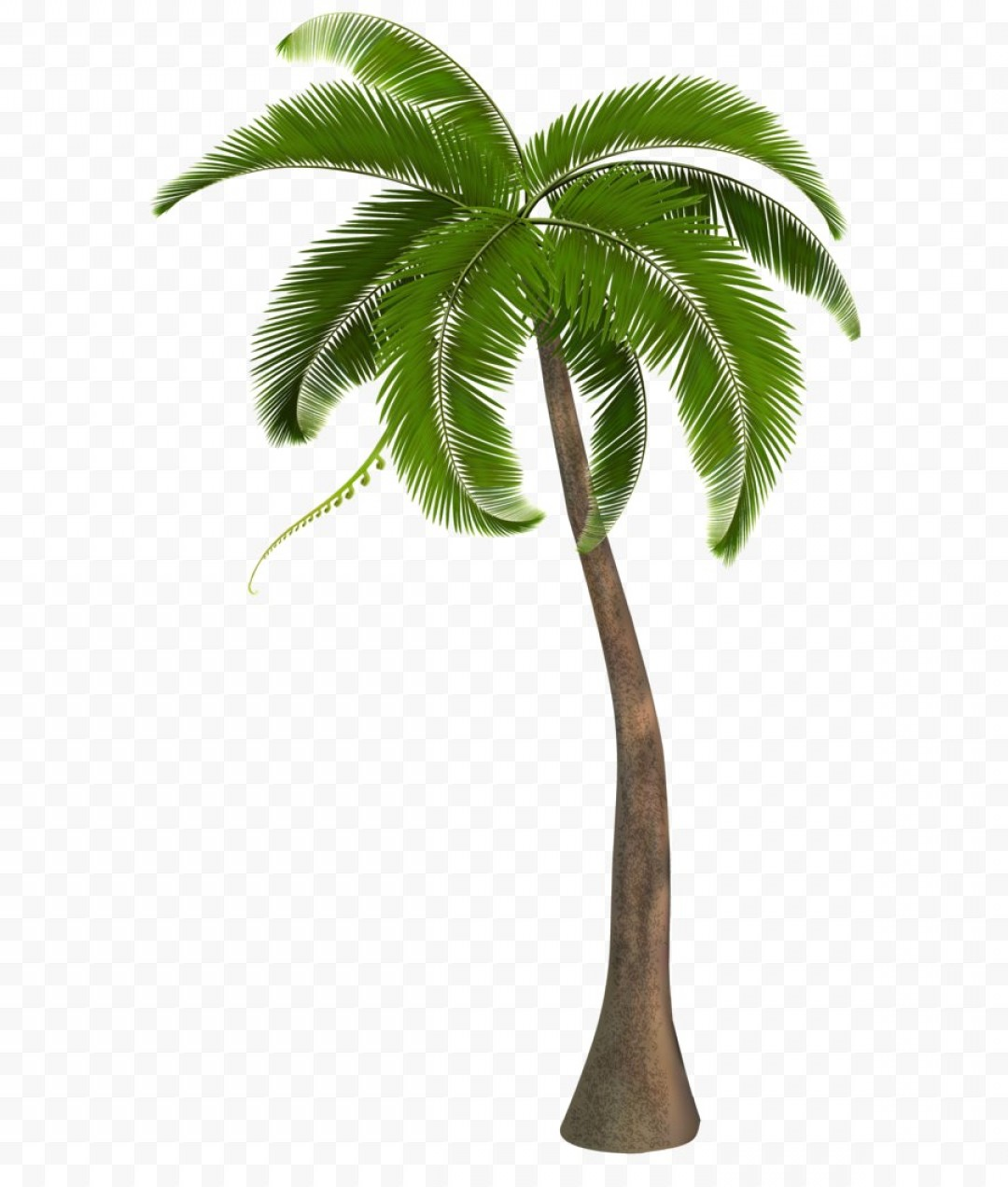 Beautiful Palm Tree Png Clipart Image Acbcddba.
