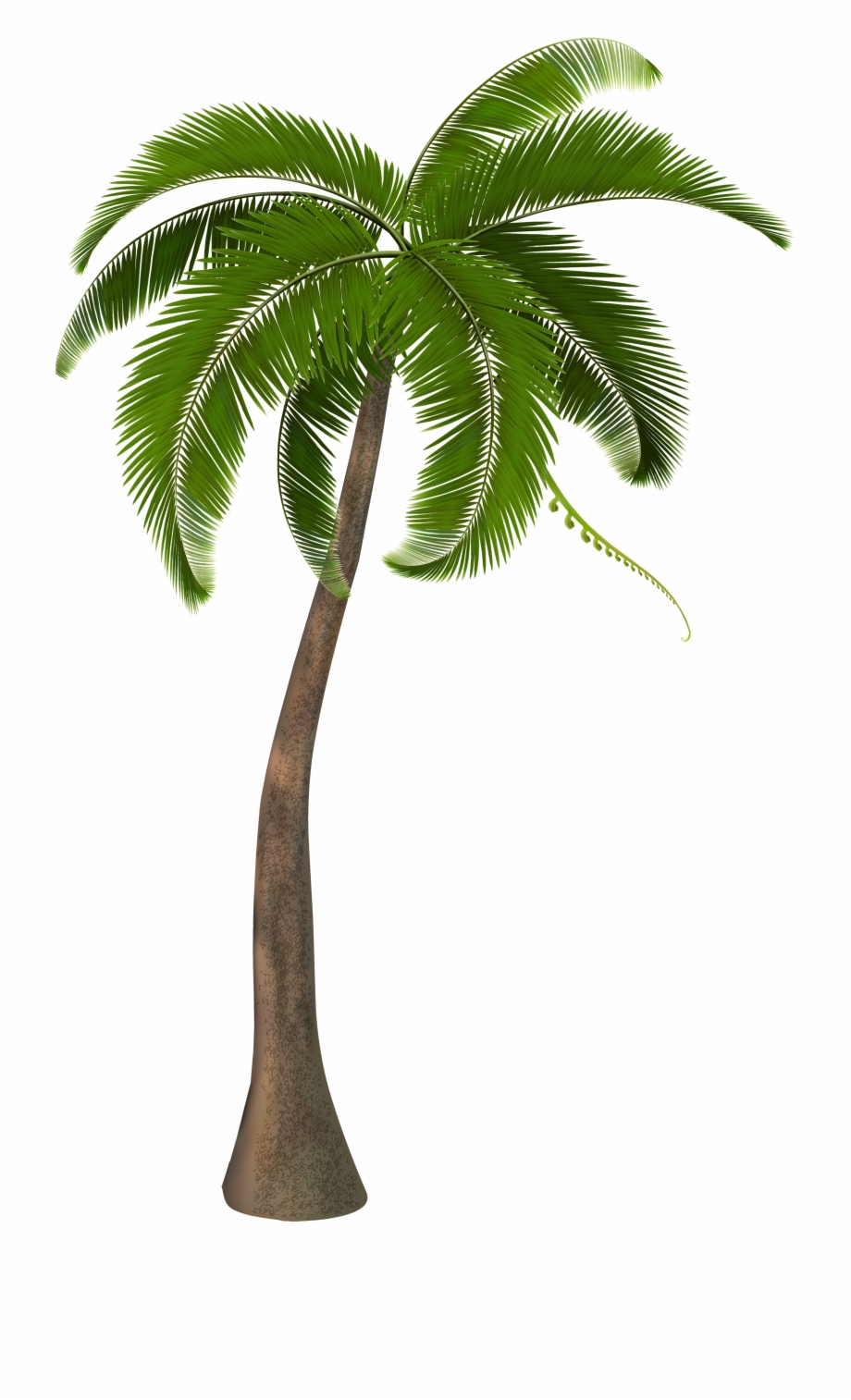 Palm Trees Png.