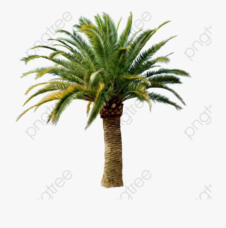 Coconut Tree Clipart Tropical.