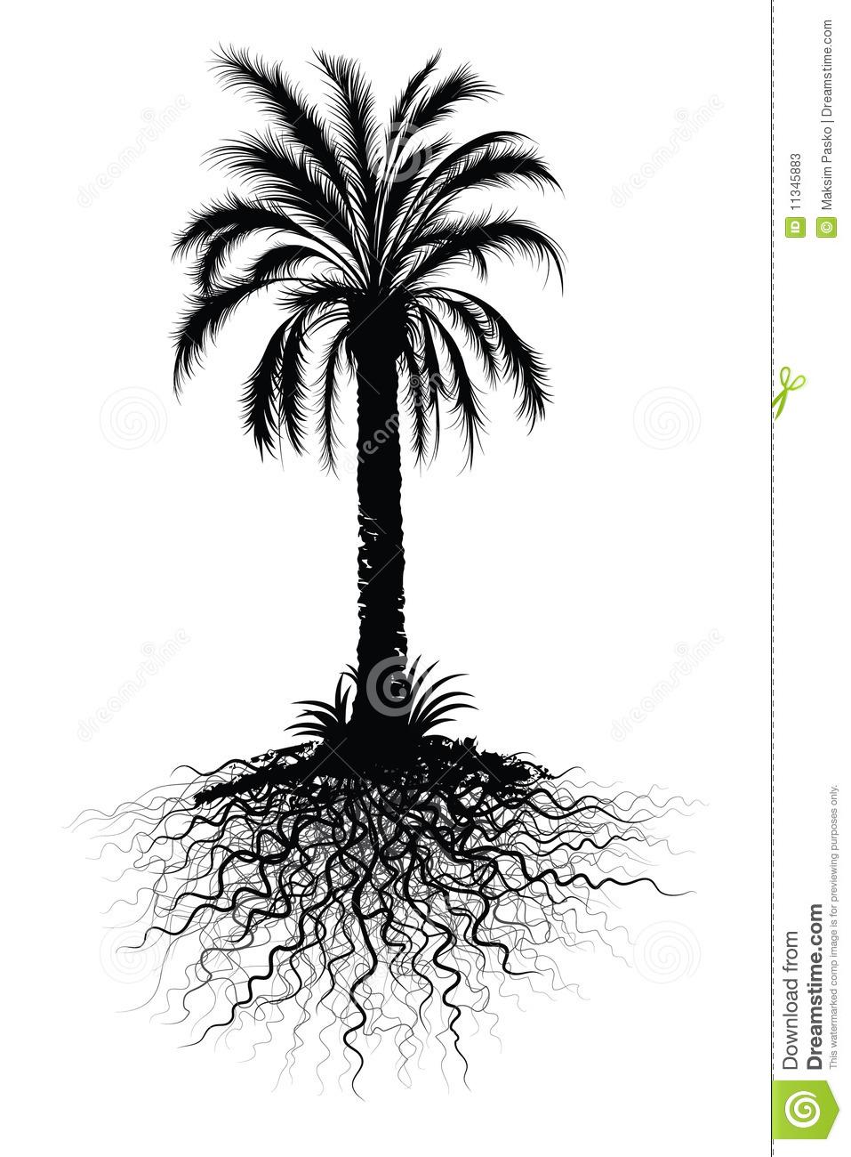 Palm Tree Sketch Stock Photos.