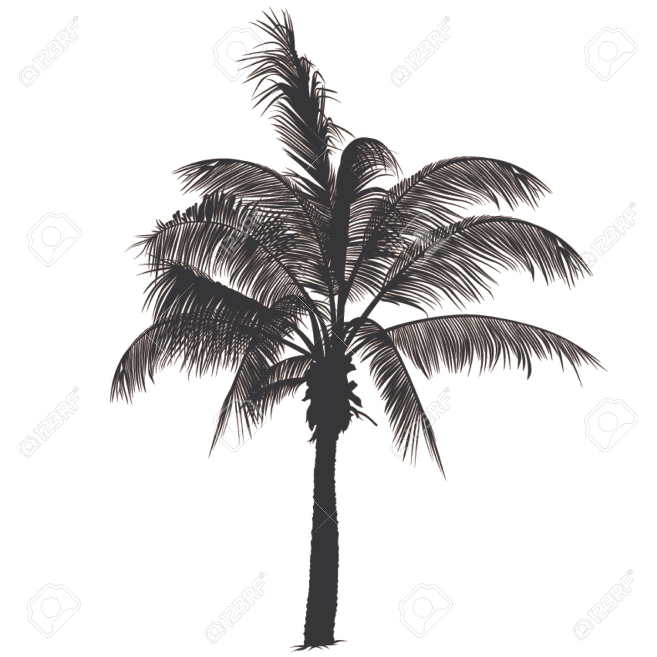 Palm tree root clipart #3