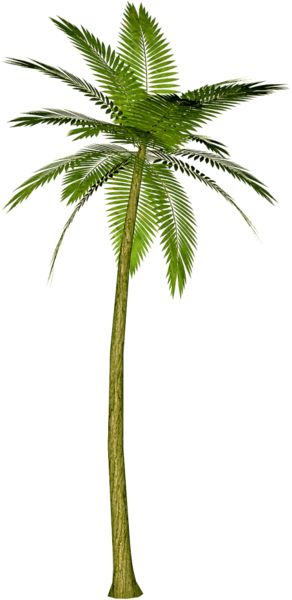 Palm tree root clipart #19