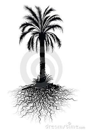 Palm tree root clipart #8