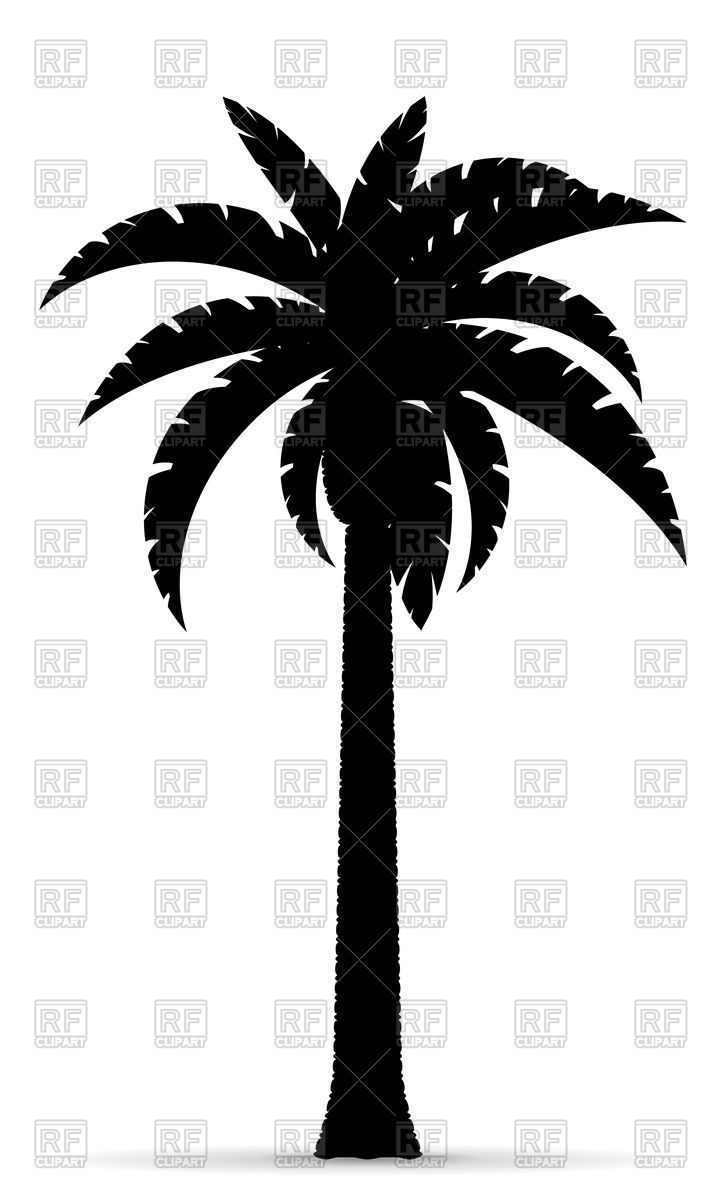 Palm tree black outline silhouette illustration isolated on a.