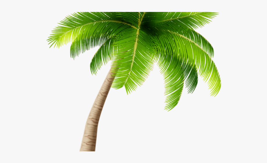 28 Palm Tree Clipart Transparent Background Free Clip.