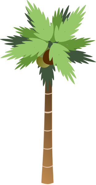 Palm Tree With Coconuts Clip Art at Clker.com.
