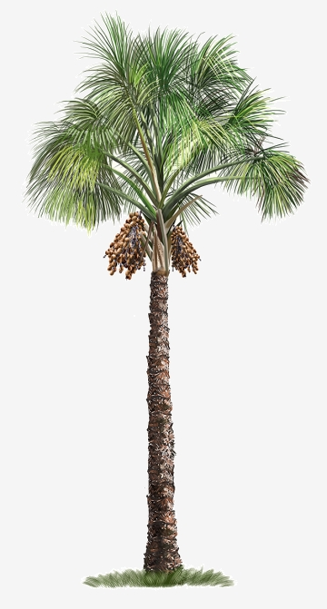 palm trees png #7