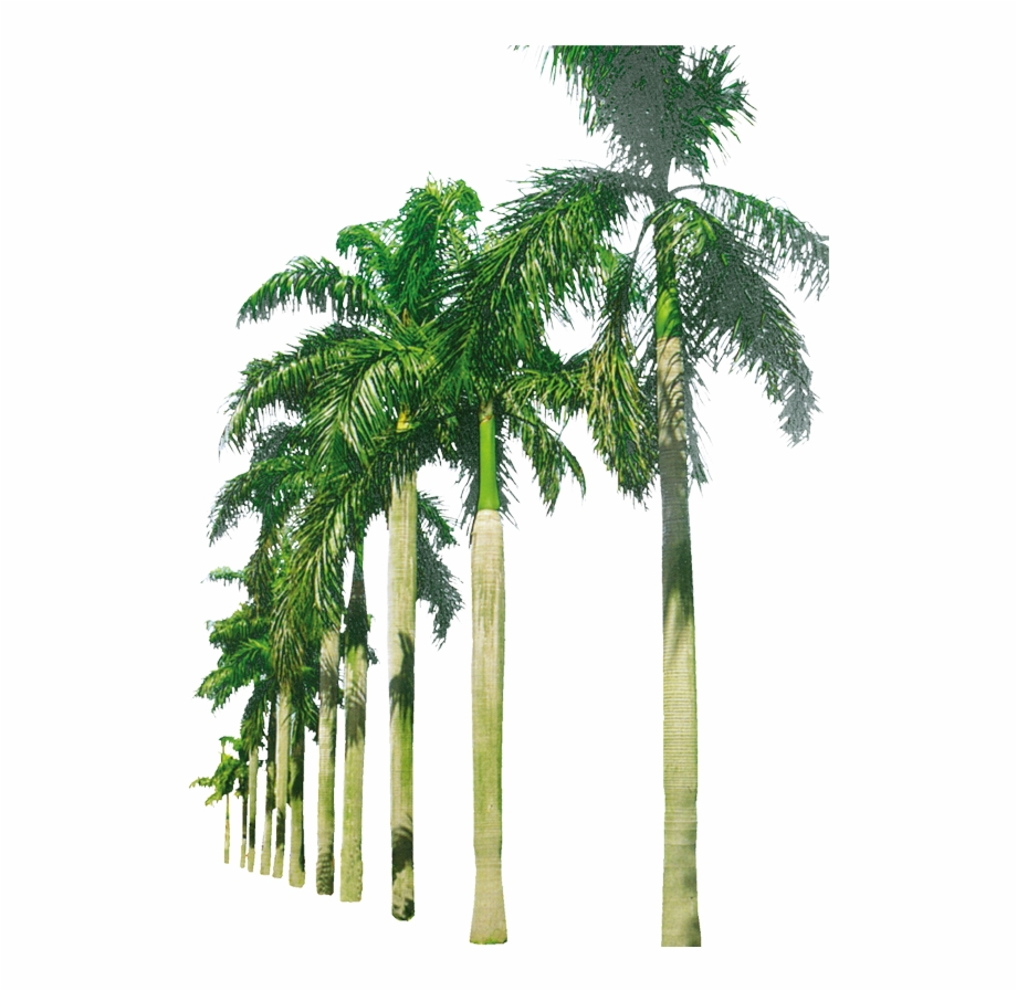 Transparent Background Palm Trees Png Free PNG Images.