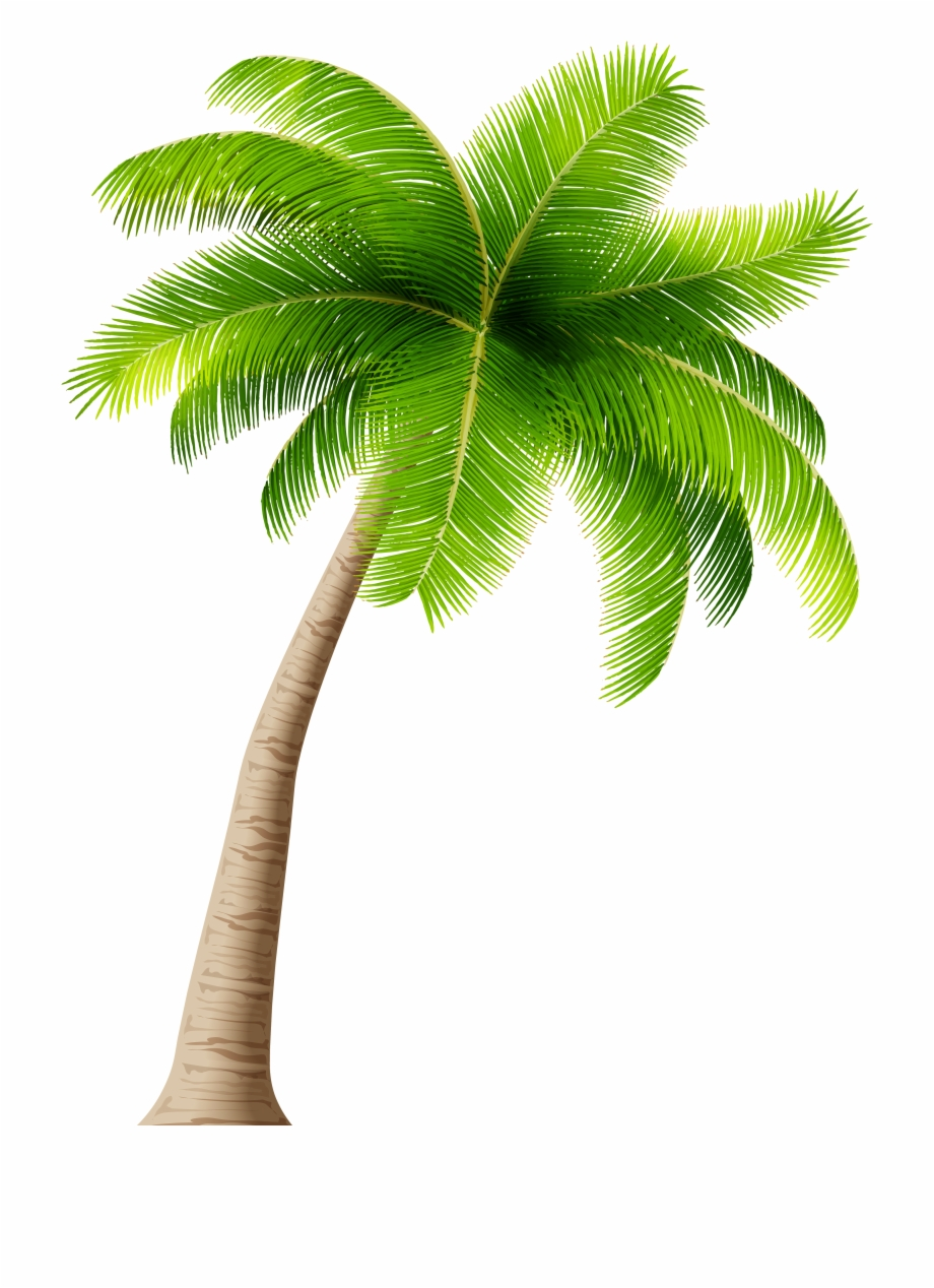 Palm Tree Png Clipart Image.