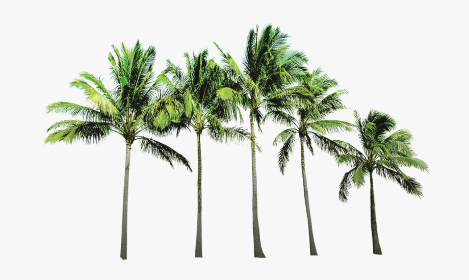 Arecaceae Beach Wallpaper.