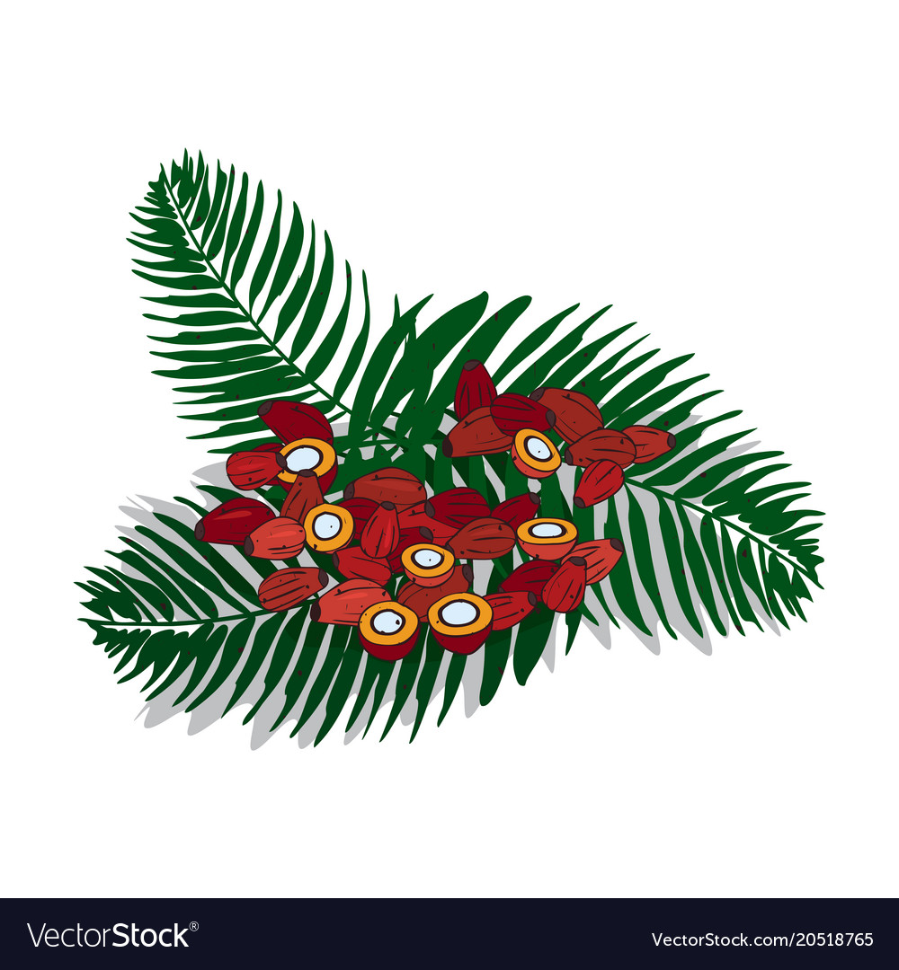 Isolated clipart palm.
