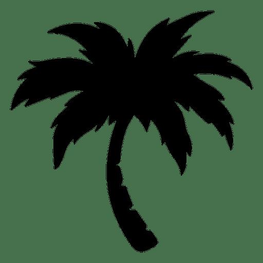 Palm palm tree.