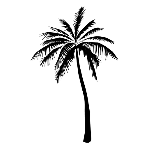 Palm tree silhouette in black.