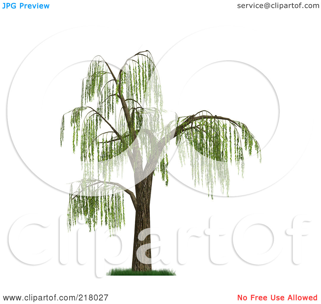 Palm willow clipart #15