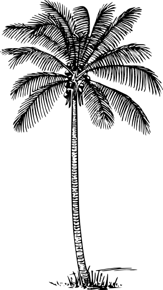 Palm Tree Clip Art at Clker.com.