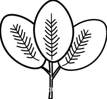 Plants : compound.
