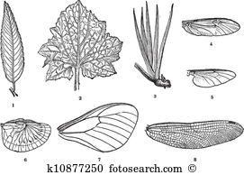 Palmate Clipart Illustrations. 22 palmate clip art vector EPS.