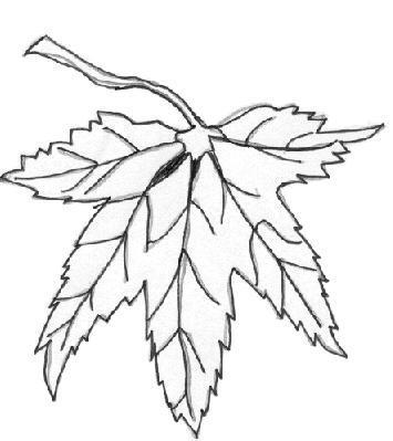 Palmate pinnate clipart #6