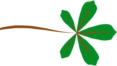 Palmate pinnate clipart #14