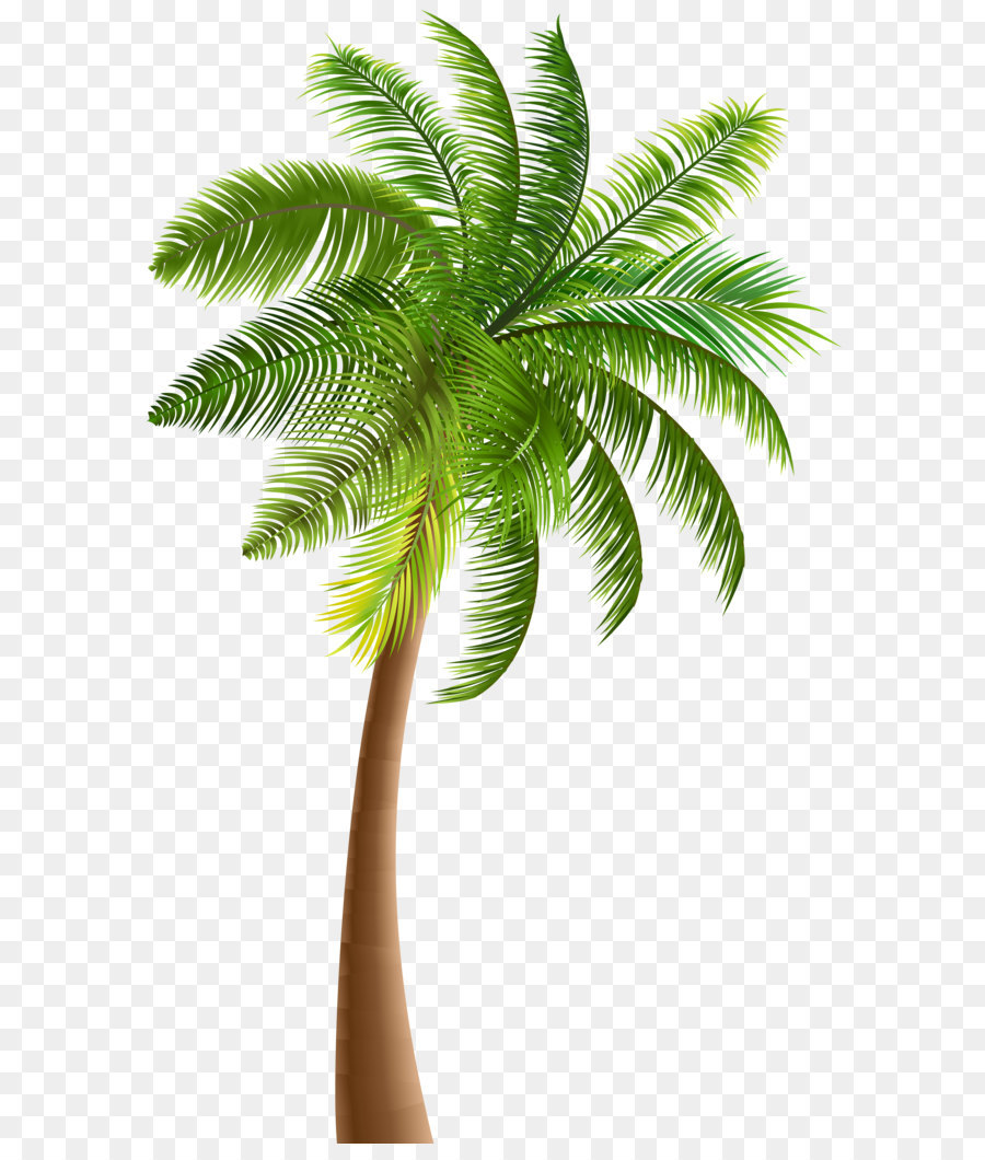 Download Free png Palm trees Clip art Palm PNG Clip Art png.
