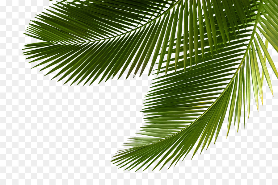 Palm Png (94+ images in Collection) Page 2.