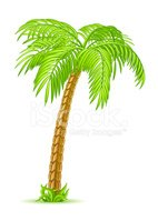 Vector Palm Tree Stock Vector.