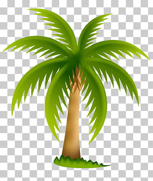 19 palmeras PNG cliparts for free download.