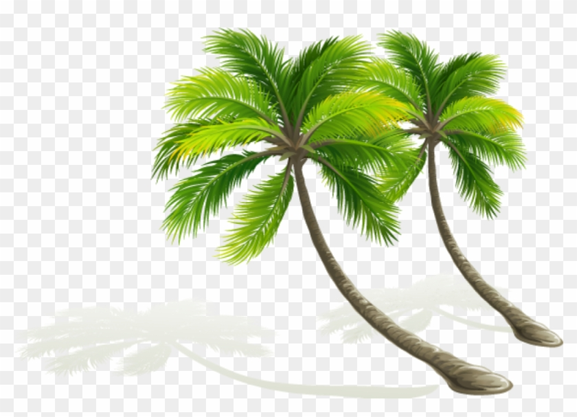 Palmera Dibujo Png Coconut Tree Vector Transparent.