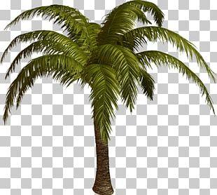 Palmier PNG Images, Palmier Clipart Free Download.