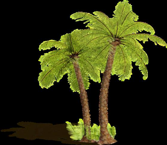 nature palmiers.