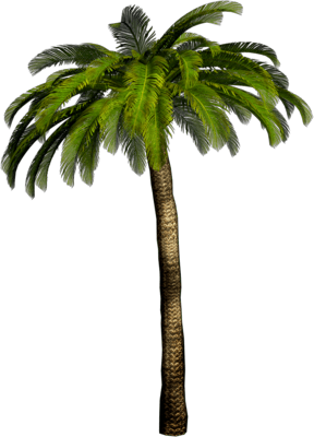 Haut Palmier PNG transparents.