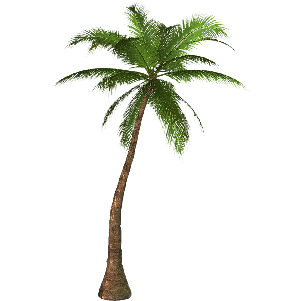 Transparency Palm trees Portable Network Graphics Clip art.