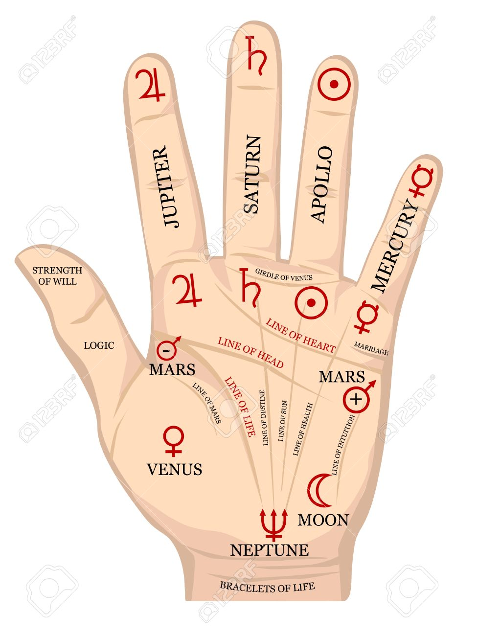 184 Palmistry Stock Vector Illustration And Royalty Free Palmistry.