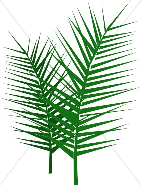Leafy Palm Branches.
