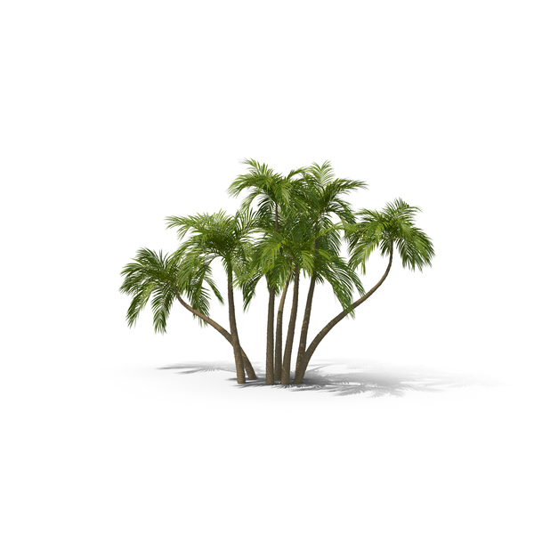 Palms PNG Images & PSDs for Download.
