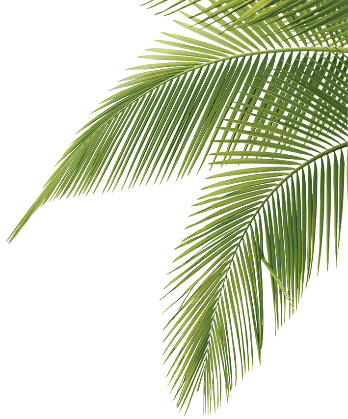 palm tree leaves.