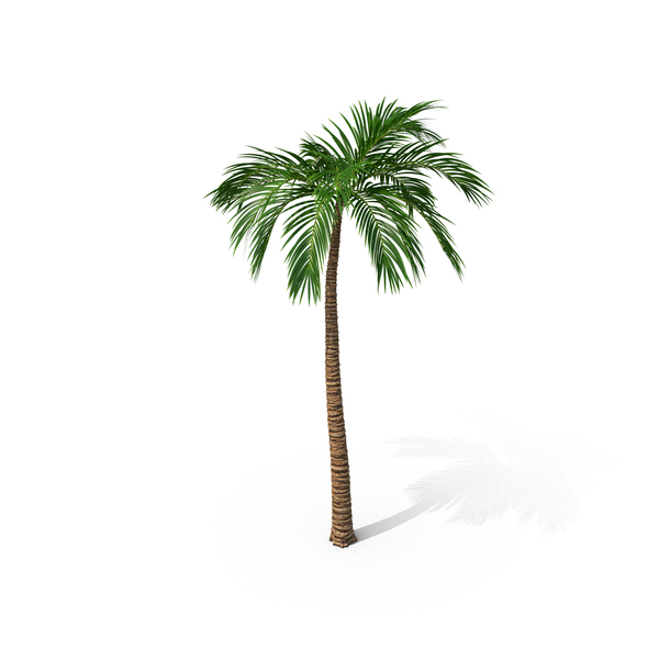 Palm Tree PNG Images & PSDs for Download.