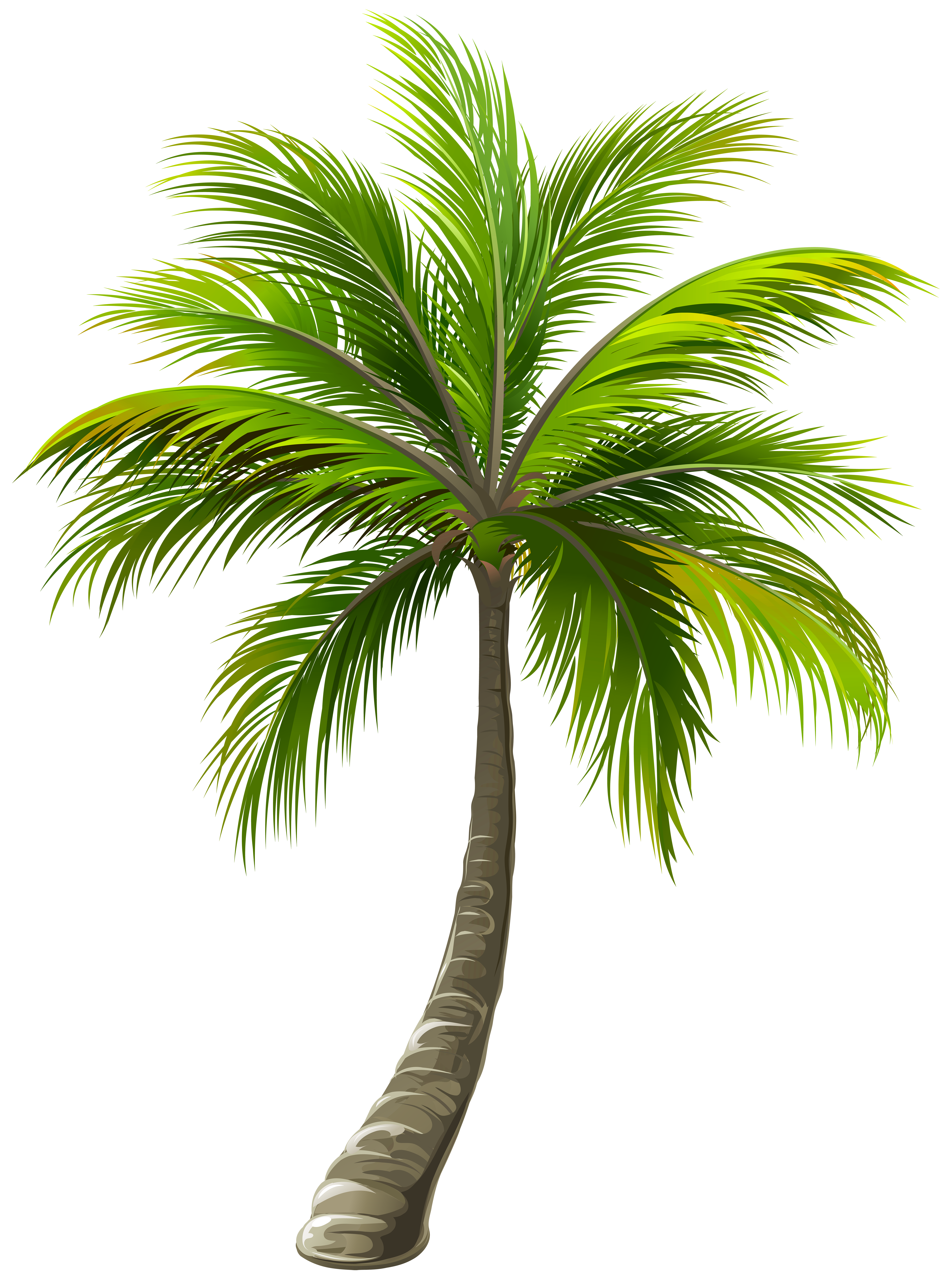 Palm Png & Free Palm.png Transparent Images #10745.