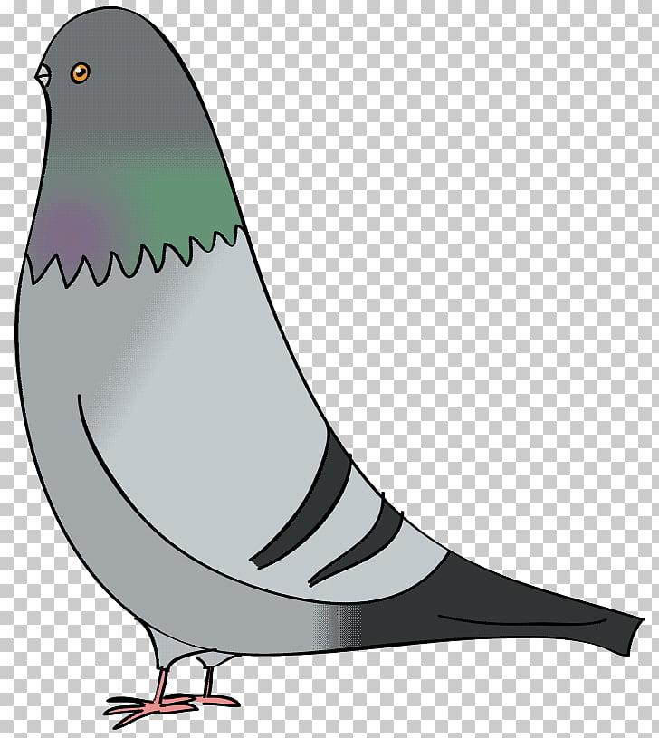 Dibujo de ave de paloma doméstica columbidae, paloma PNG.