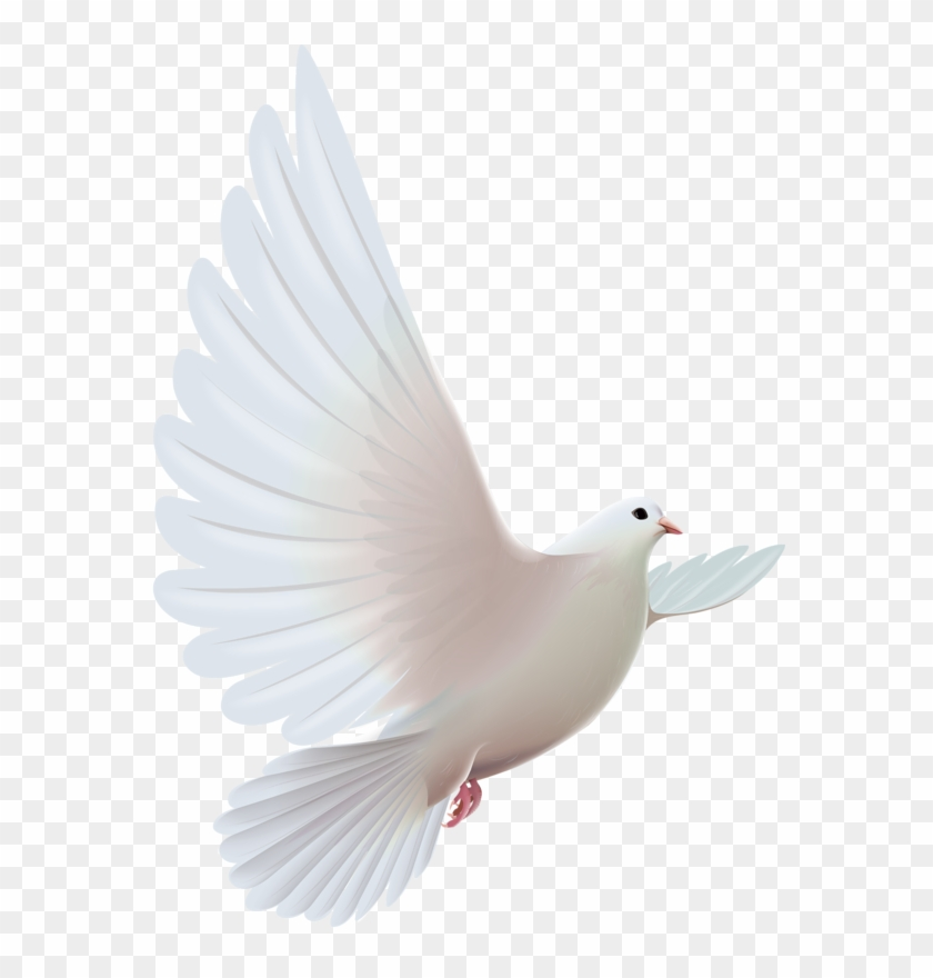 Doves Png Pinterest Bird Clip Art And Ⓒ.