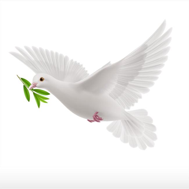 Paloma blanca de dibujos animados PNG Clipart.