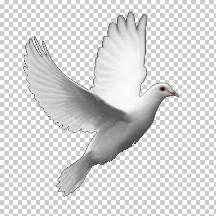 Columbidae pájaro vuelo perfecto paloma blanca lanza, pájaro.