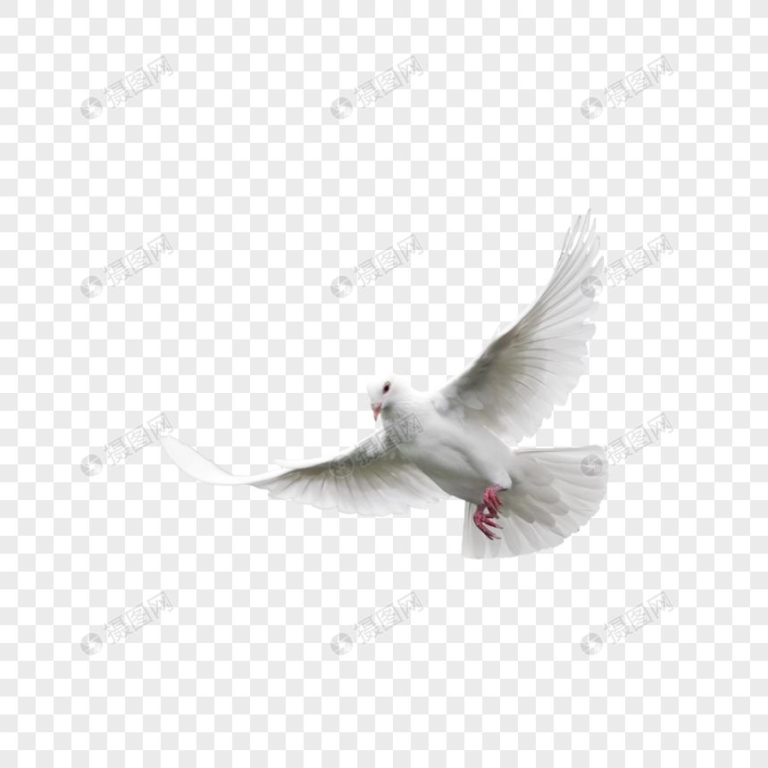 paloma blanca Imagen Descargar_PRF Gráficos 400910277_png.