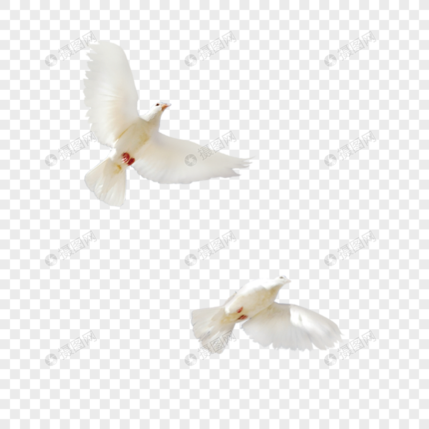 dos palomas blancas Imagen Descargar_PRF Gráficos.