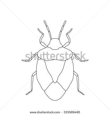 Stink Bug Stock Vectors, Images & Vector Art.