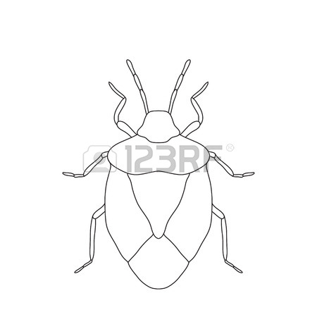 Shield Bug. Palomena Prasina. Sketch Of Shield Bug. Shield Bug.