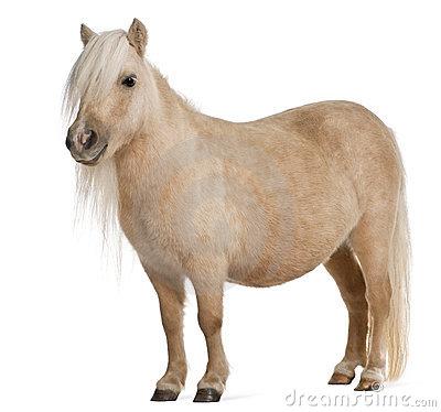 Shetland pony clipart.
