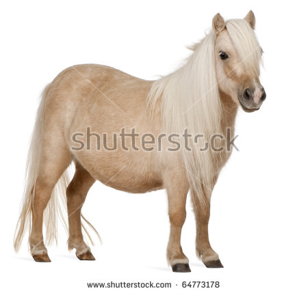 Pony Stock Images, Royalty.