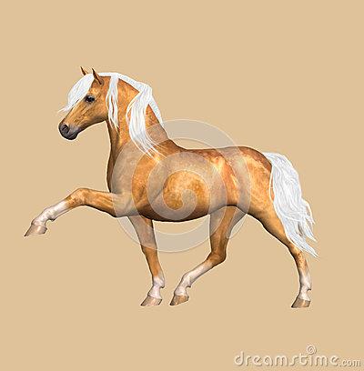 Palomino Horse Stock Illustrations.
