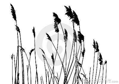 Grass Silhouette Stock Illustrations.